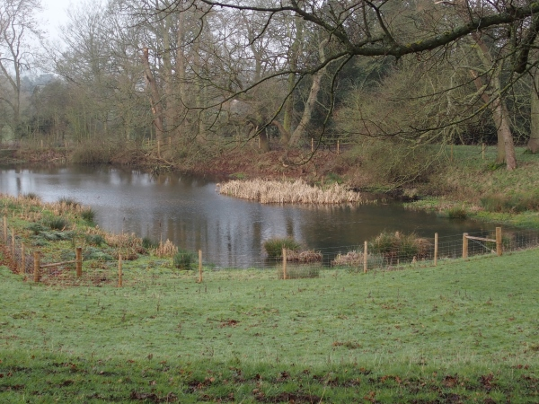 Calke Abbey pond a year after the work